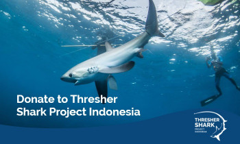 Donate to Thresher Shark Project Indonesia